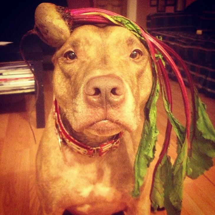 Perro sostiene cosas en la cabeza con una planta encima