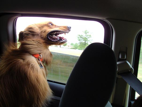 Perro sacando su cabeza por la ventana