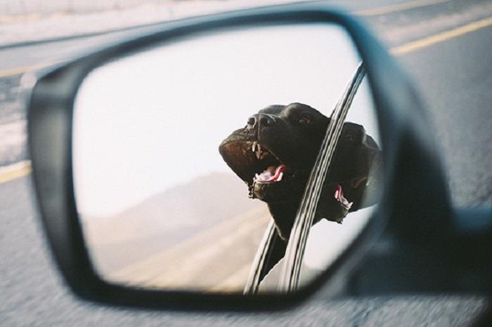 Cara de un perro reflejada en el retrovisor asomado por la ventana