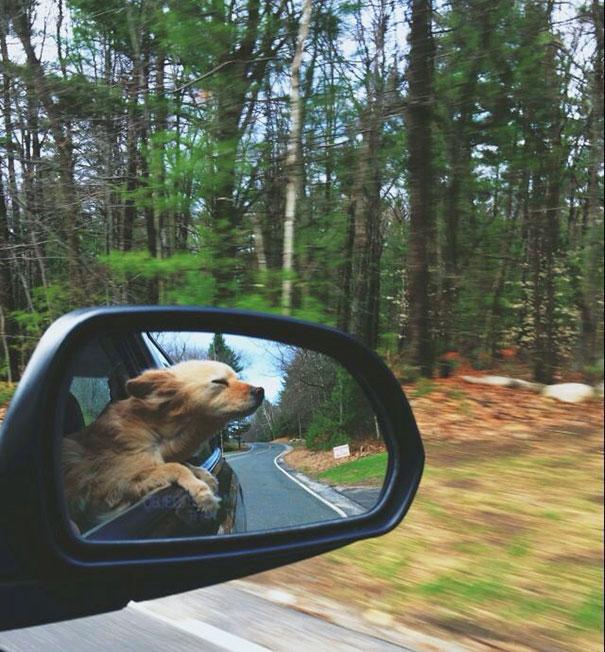 Un perro reflejado en el retrovisor con una cara de satisfacción al oler el viento