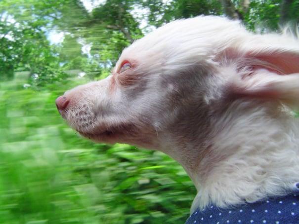 Perro asomado por la ventana con ojos muy abiertos