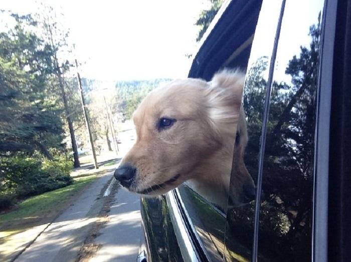 Perro asomado por la ventana con la mirada hacia el suelo