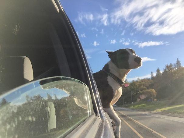 Perro con la mitad de su cuerpo fuera de la ventana de un coche
