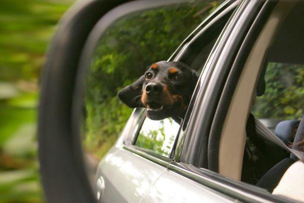 Cara de un perro fuera de la ventanilla de un coche reflejada en un retrovisor