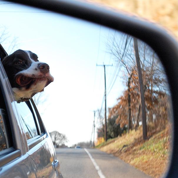 Perro con aire en la cara reflejado en el retrovisor de un coche