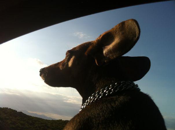 Perro asomado por la ventana