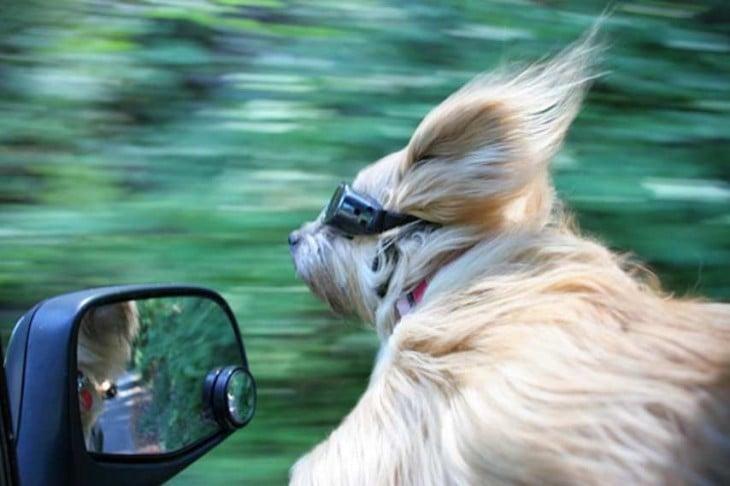 Un perro con lentes sacando la cabeza por la ventana