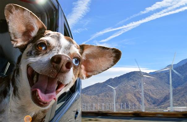 Perro con cara de felicidad sacando la cabeza por la ventana