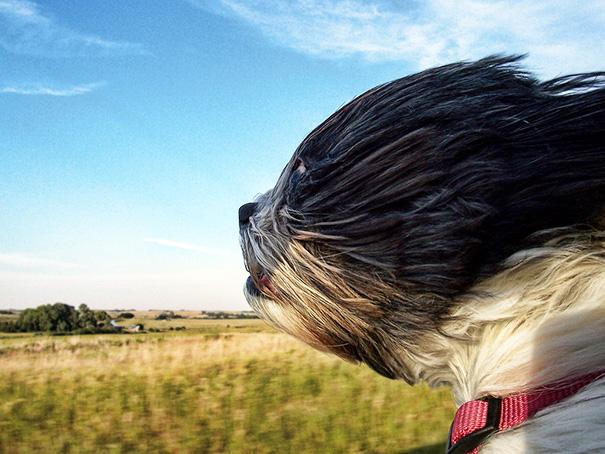 Perro con la cabeza de fuera de un coche con aire en la cara