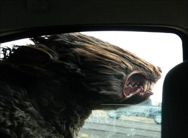 Perro con la cara por la ventana recibiendo un fuerte aire en la cara