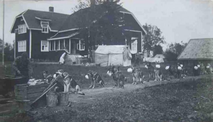linea de caninos haciendo fila para recibir su comida en una granja en algún lugar de la guerra de Finlandia