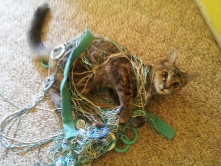 Gato acostado en una alfombra enredado en una red