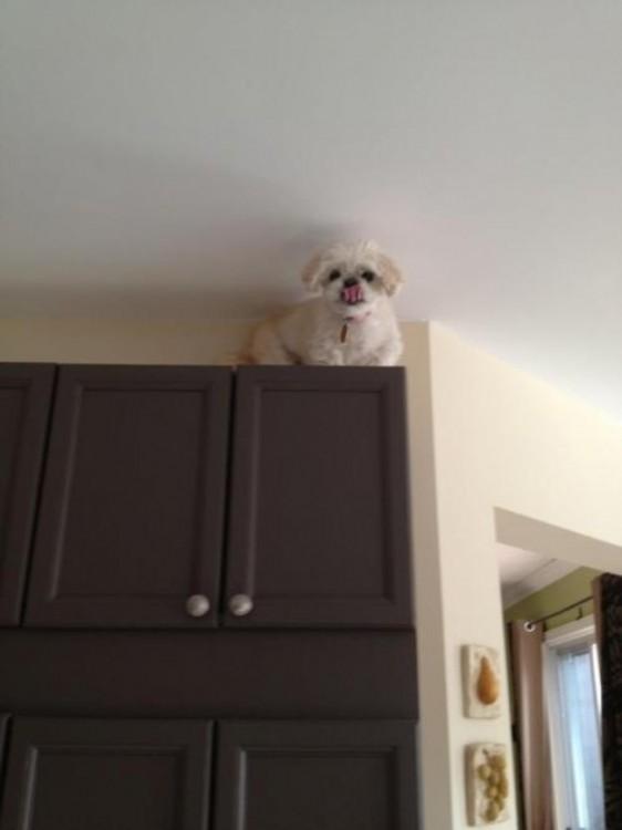 Perro arriba de una alacena cerca de la pared