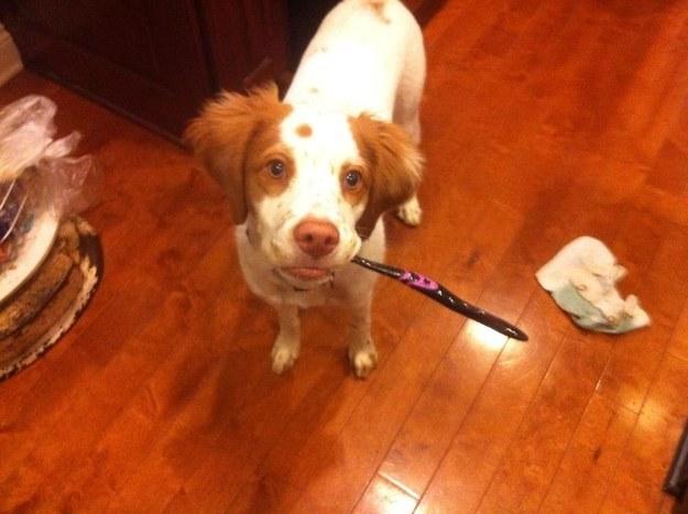 Perro parado en el suelo con un cepillo de dientes en el hocico