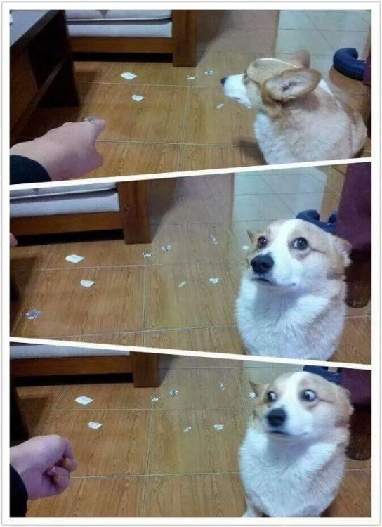 fotografía de un perro dividida en 3 partes de la cara de un perro siendo regañado