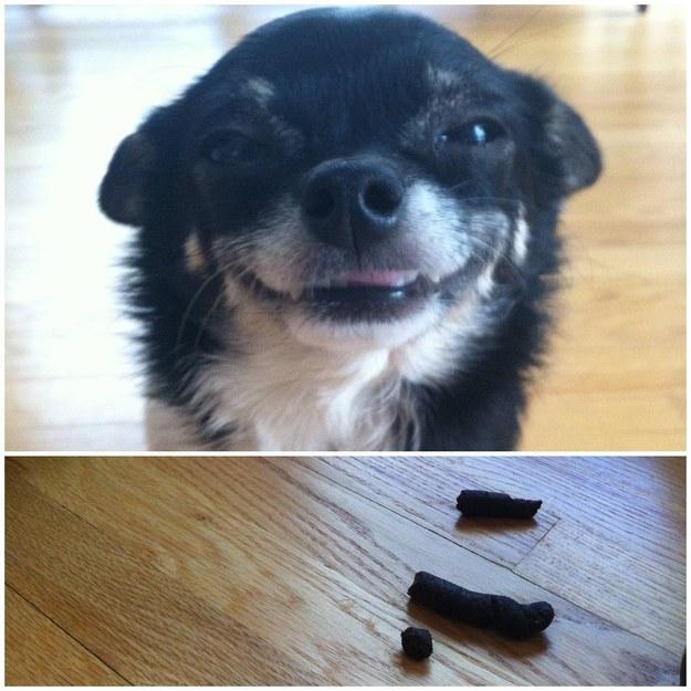 Cara de un perro sonriendo y debajo una foto de su excremento