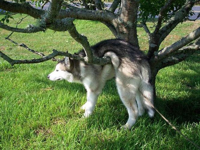 Perro atorado entre las ramas de un árbol