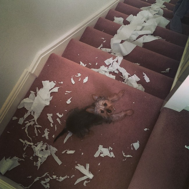 Perro acostado en un escalón con muchos pedazos de papel en las escaleras