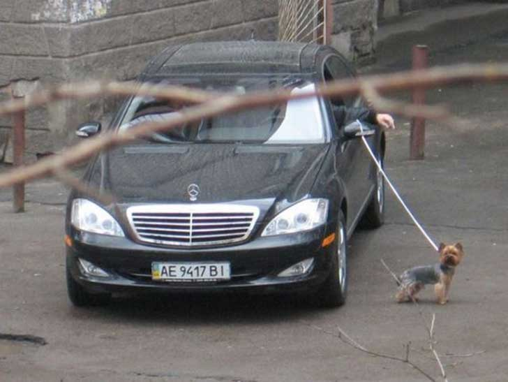 persona con un perro amarrado a un carro