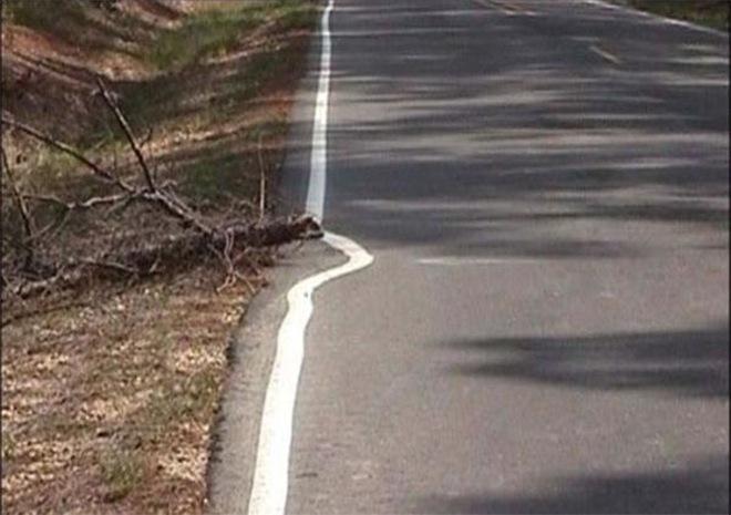 Una carretera pintada evitando pintar el tronco de un árbol
