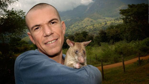 Bart Weetjens junto a una rata heroína de áfrica