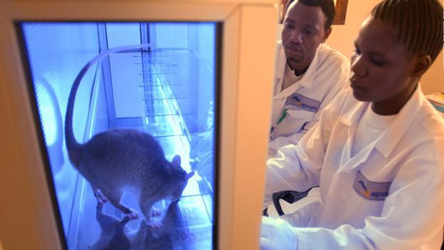 Personas estudiando a una rata dentro de un laboratorio