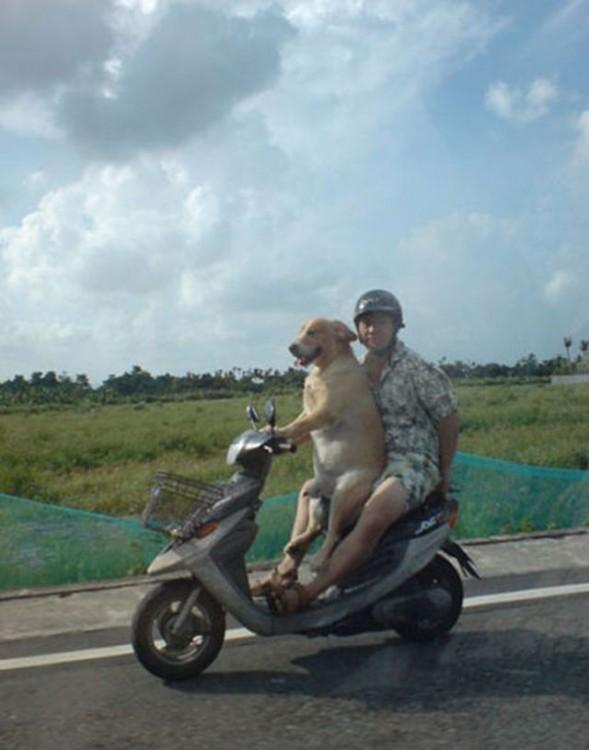 Un perro frente a un hombre que van sobre una motocicleta
