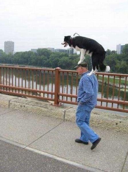 Perro sobre los hombros y cabeza de su amo dando una vuelta