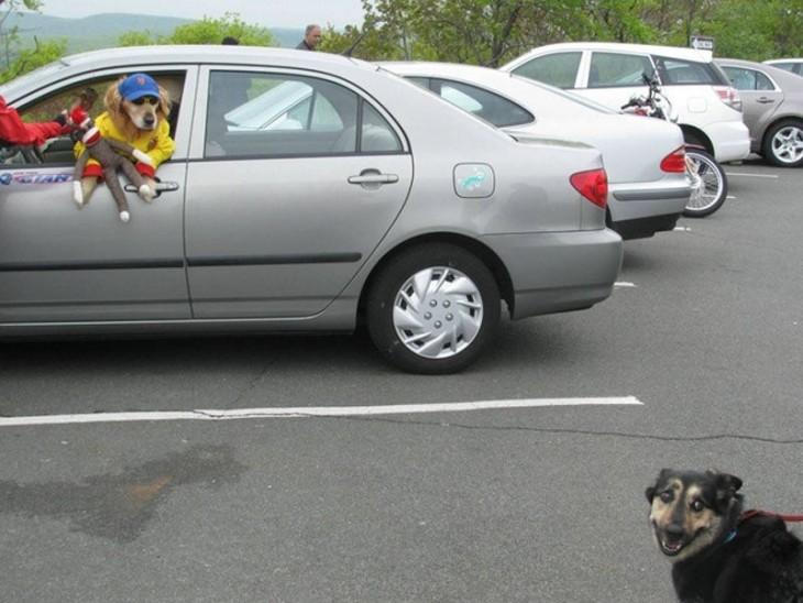 Un perro con cachucha y lentes sobre un carro y otro perro debajo atado de una cadena