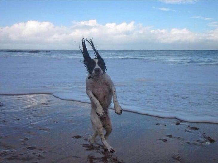 Perro parado en dos patas simulando que camina por la playa