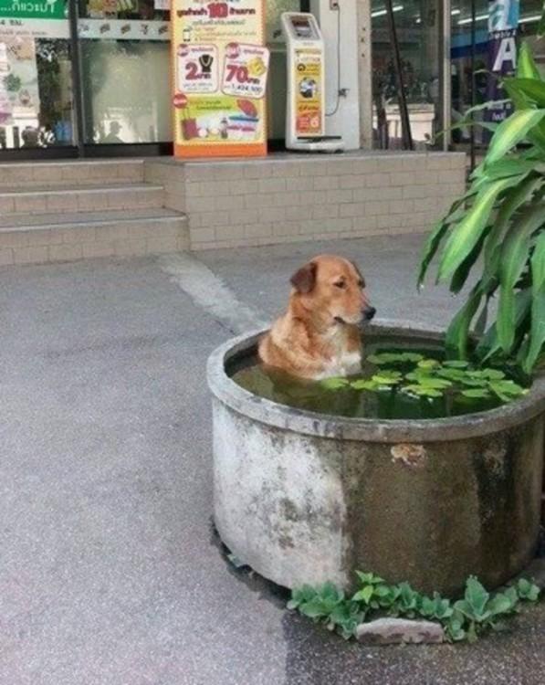 Perro dentro de un espacio lleno de agua