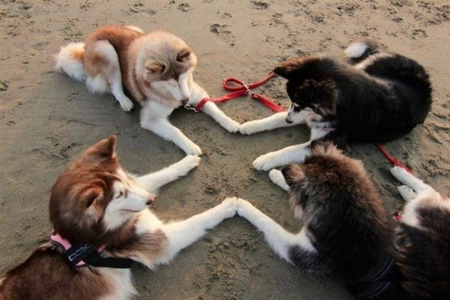 4 Perros en un círculo uniendo sus patas