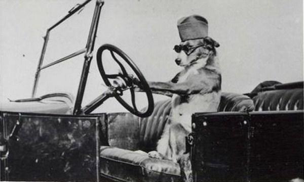 perro sentado en el asiento de un coche simulando que va manejando
