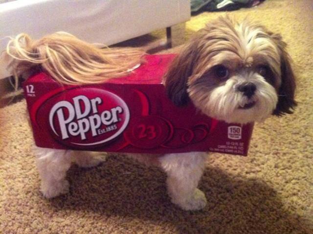 Un pequeño perro dentro de una caja de Dr. Pepper