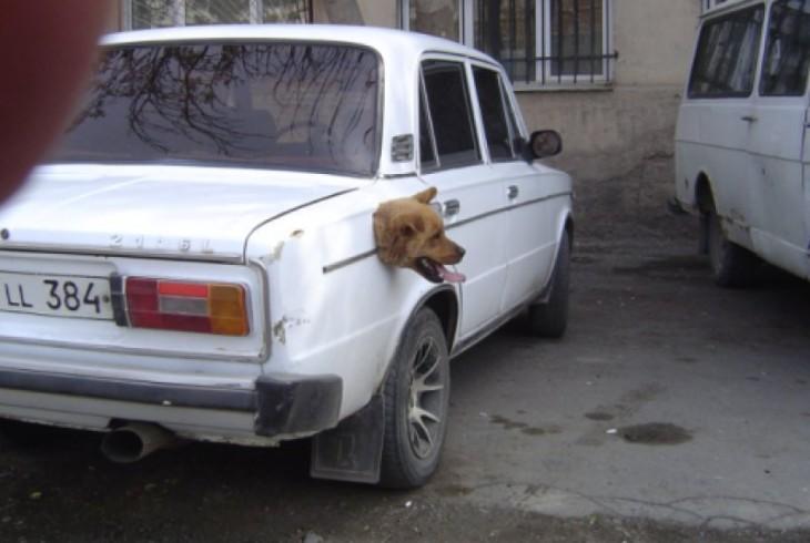 Cabeza de un perro saliendo del tanque de la gasolina de un carro
