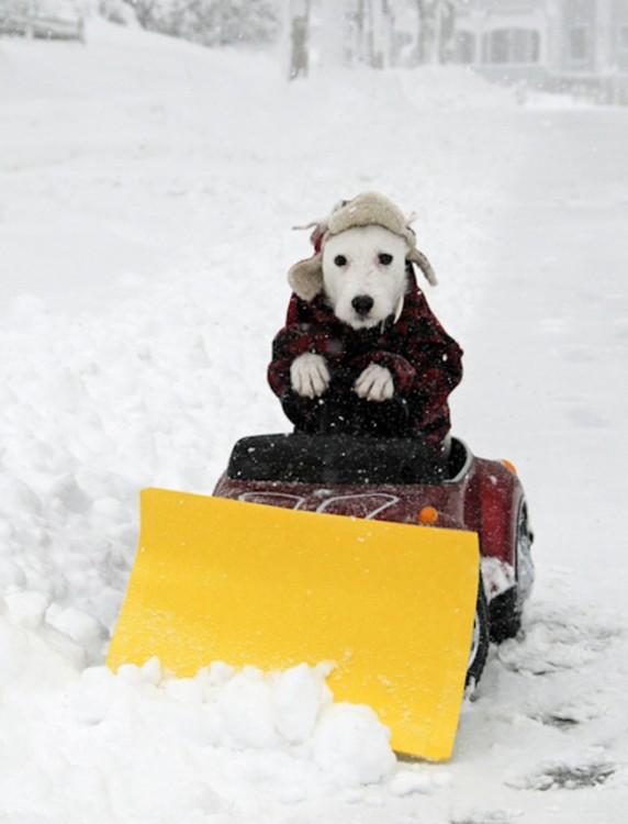 Perro simulando que quita la nieve arriba de una maquina