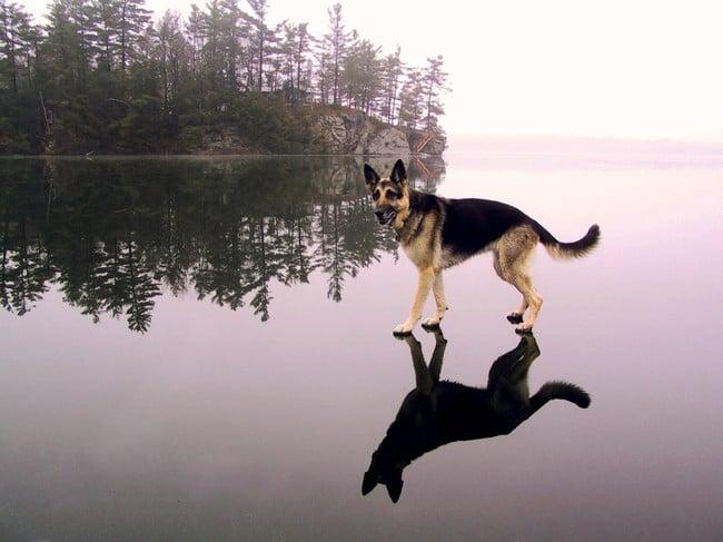Perro que simula estar parado sobre el agua