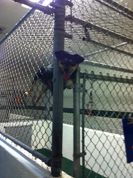 Perro atorado en medio de una puerta