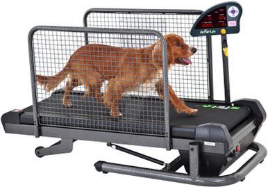 Perro sobre una caminadora para perros