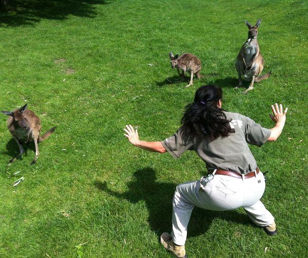 Mujer de un zoológico frente a unos canguros