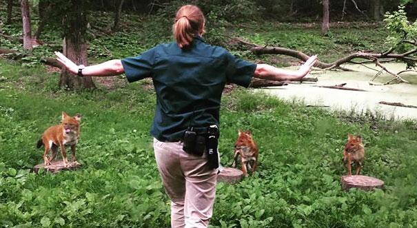 Cuidadora de un zoológico frente a 3 zorros