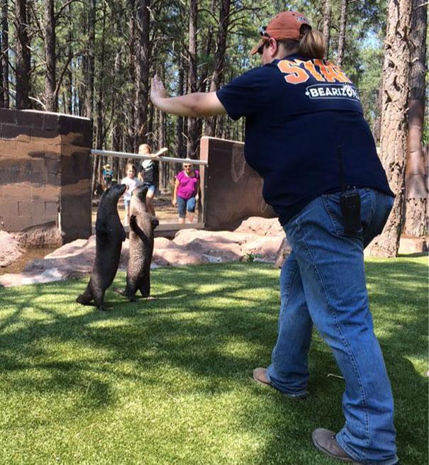 Persona frente a unas mantarayas en un zoológico
