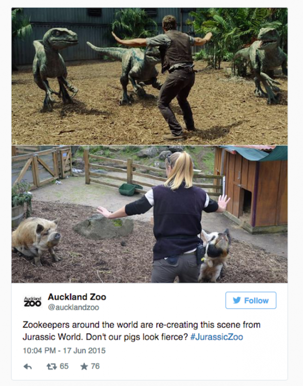 chica que trabaja Auckland Zoo con unos cerditos