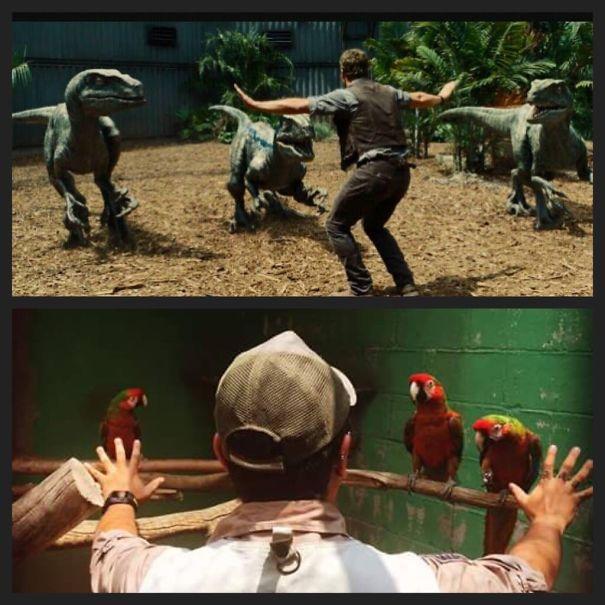 Parte trasera de un hombre frente a unas guacamayas dentro de un zoológico