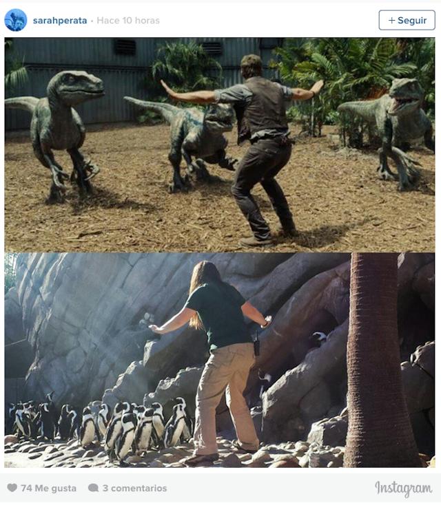 Encargada de un zoológico frente a un grupo de pingüinos
