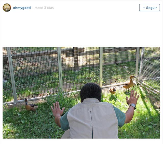 Cuidador de zoológico frente 3 patos
