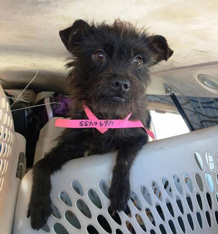 Cachorro rescatado por alas de rescate dentro de un avión