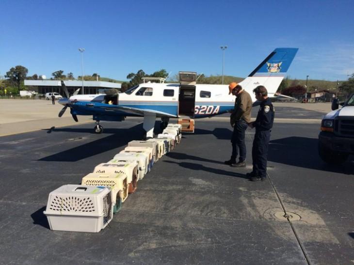 Voluntarios de la organización alas de rescate con algunos perros antes de subirlos a un avión