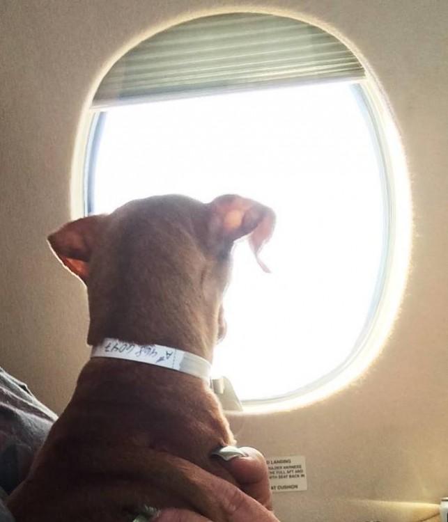 cachorro viendo por la ventana rescatado por la organización alas de rescate