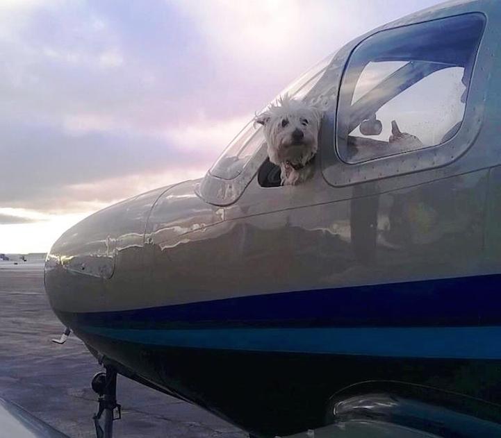 Cachorro dentro de un avión de la organización alas de rescate